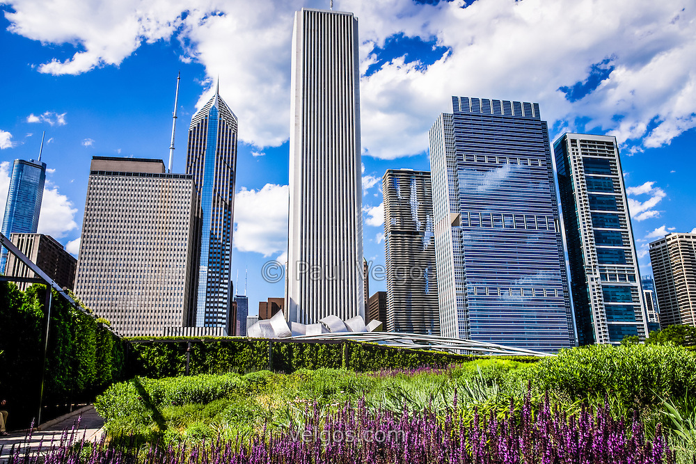 Chicago Skyline And Lurie Garden Picture Buy Canvas Prints Large Wall Art And Stock Photos
