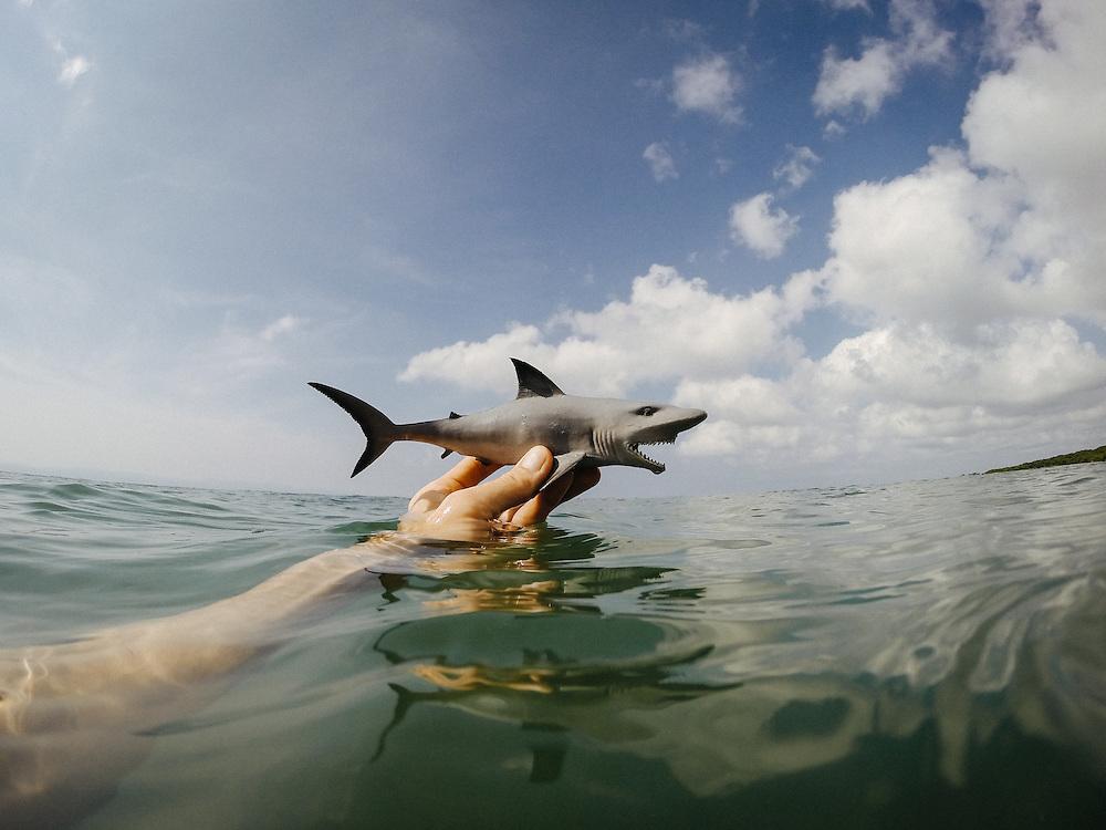 Tiburon. Punta Burros, Mexico
