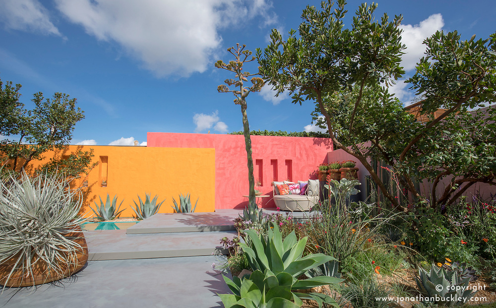 Beneath a Mexican Sky Garden with flowering Agave parryi and brightly coloured painted walls.  Design: Manoj Malde, Built by: Living Landscapes, Sponsored by: Inland Homes PLC