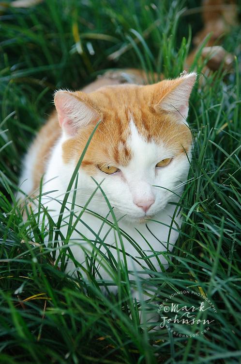Cat in mondo grass