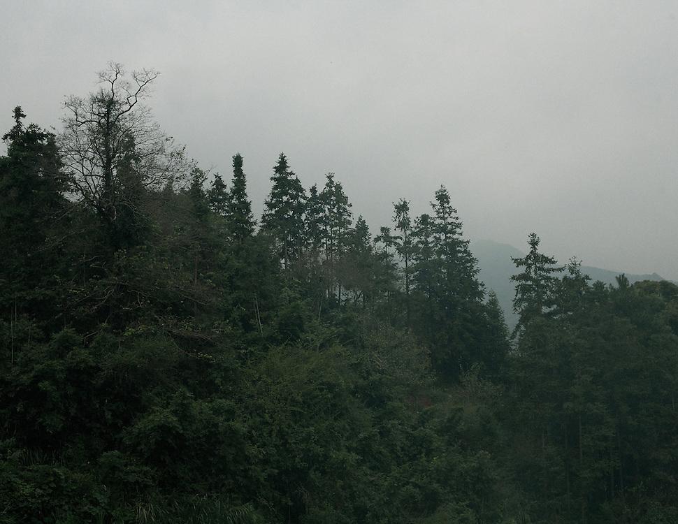Forêt du Fujian, fin de journée.