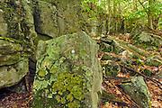 Rocks in Carolinian Forest<br /> Thousand Islands National Park<br /> Ontario<br /> Canada