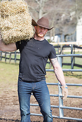 muscular cowboy on a working ranch