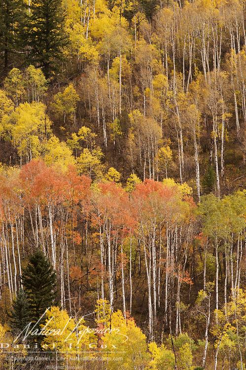 Maroon Bells Snowmass Wilderness area near Aspen, Colorado during autumn.