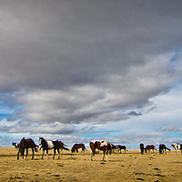 horses under big stormy skys