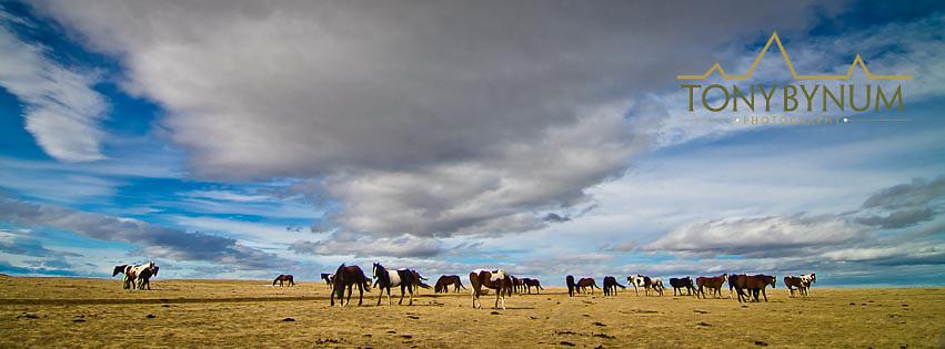 horses under big stormy skys