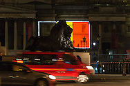 One of the Trafalgar Square lions appears to keep watch as the National Gallery in Trafalgar Square is illuminated in the colours of the Belgian flag in a display of solidarity with Belgium following the terror attacks on March 22nd. Westminster, London<br /> Picture by Paul Davey/Focus Images Ltd +447966 016296<br /> 23/03/2016