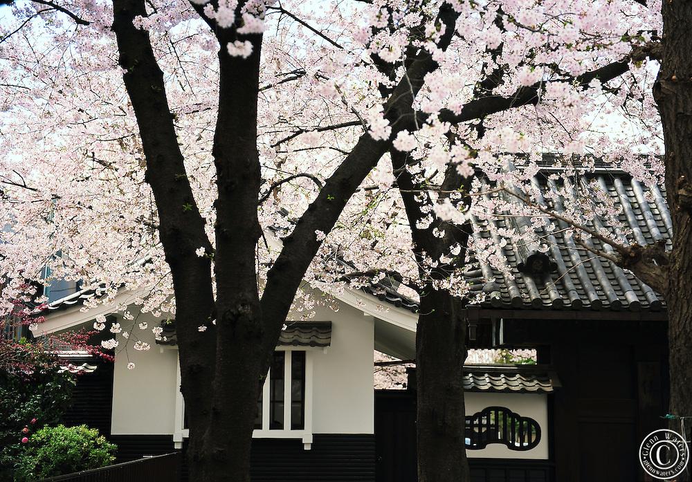 Sensoji (also known as Asakusa Kannon Temple) is a Buddhist temple located in Asakusa, Tokyo Japan.<br /> Asakusa Sensoji temple was built for the goddess of Kannon. The temple was completed in 645, making it Tokyo's oldest temple.