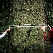 Etude par deux scientifiques américaines, Karen Kainer et Christie Stanhammer de la castanheira du Para, ou la noix du Para. L'arbre emblématique de cette région de l'Acre pourrait avoir plus de 500 ans. Aurait il était témoin de la civilisation des geoglyphes et de l'arrivée des premiers portugais.