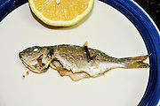 a plate with a Grilled fish with lemon
