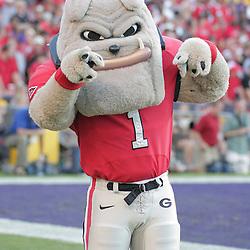 25 October 2008:  Georgia Bulldogs mascot on the sideline during the Georgia Bulldogs 52-38 victory over the LSU Tigers at Tiger Stadium in Baton Rouge, LA.