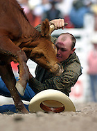 Battle Between Man and Beast, Steer Wrestling, 2004 Cheyenne Frontier Days Rodeo, Cheyenne WY, July 2004