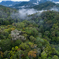 Established in 1991, Ranomafana National Park protects over 160 sq. mi. of tropical rainforest, a habitat which has been reduced to less than 10% of its original extent in Madagascar.