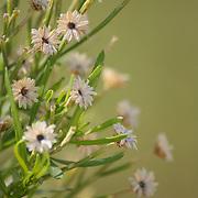 Desert flowers at the Riparian Preserve in Gilbert, AZ