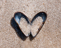 Long Island, New York. Hamptons - open mussel in the shape of a heart lying on the beach.