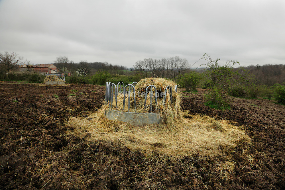 cow food container with hay in a field