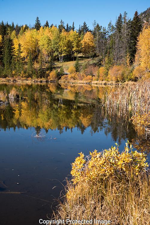 Vermillion Lakes wetland, Alberta, Canada, Isobel Springett