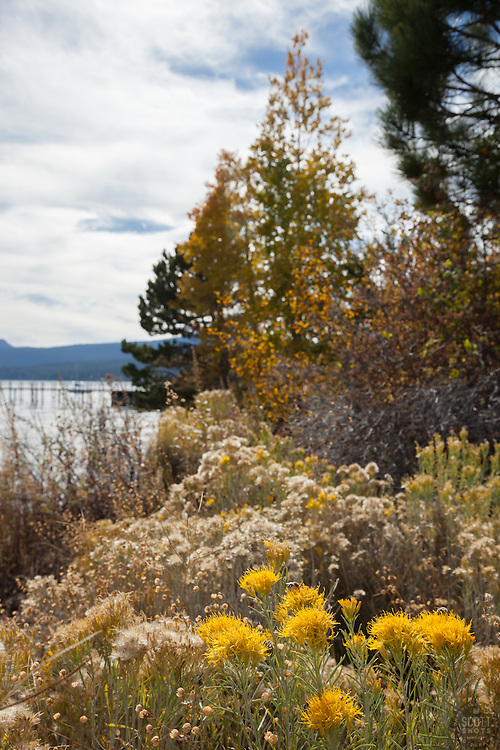 """""""Fall Flowers at Lake Tahoe"""" - These flowers were photographed near the Tahoe City Coast Guard boat launch in the fall."""