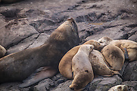"Numerous sea lions populated the rocky island upon which the towering ""Les Eclaireurs"" lighthouse is located.  This familyj, that included a mother sea lion with her young was just one of nearly a hundred animals that rested in various poses nearby."
