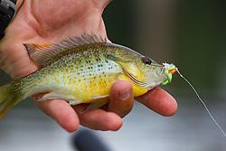 Sunfish on the Holsten