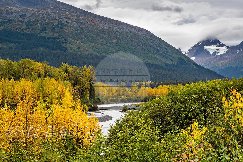 Aspen trees begun turning as autumn approaches along the Snow River in the Kenai Peninsula near Seward, Alaska
