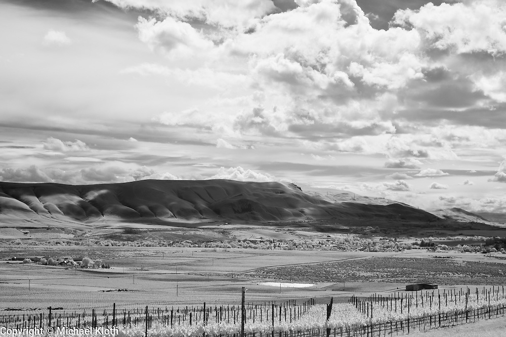 Infrared photograph of a vineyard in the Red Mountain AVA in Benton County, WA.  Fine art photography by Michael Kloth. Black and white infrared photographs