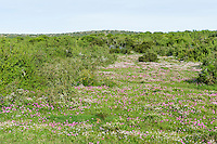 Open grassy veld covered in a diversity of flowers, Addo Elephant National Park, Eastern Cape, South Africa