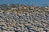 Dry cracked soil along the shoreline of the Salton Sea, Imperial Valley, California