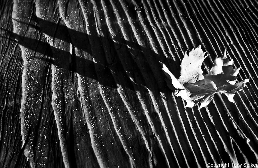 """""""Maple Leaf 1"""" - A black and white photograph of a Maple leaf casting its shadow over a rough piece of wood"""