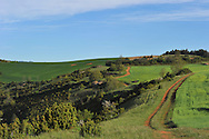 07/05/15 - SAINT BONNET DE CHIRAC - LOZERE - FRANCE - GAEC des Bleuets, elevage mixte bovin/ovin lait. Parcelle d orge sur le causse - Photo Jerome CHABANNE