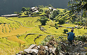 "A farmer contemplates rice terraces near Kimche, along the trail to Annapurna Sanctuary in Nepal, Asia. In Nepal, humans have worked the land for thousands of years by stripping forests for firewood, terracing fields for agriculture (to grow grains, rice, potatoes, etc), and grazing yaks as high as 15,000 feet elevation. Farmers work every patch of arable land to support a dense population of people, who often push aside or destroy native species. Published in ""Light Travel: Photography on the Go"" book by Tom Dempsey 2009, 2010."