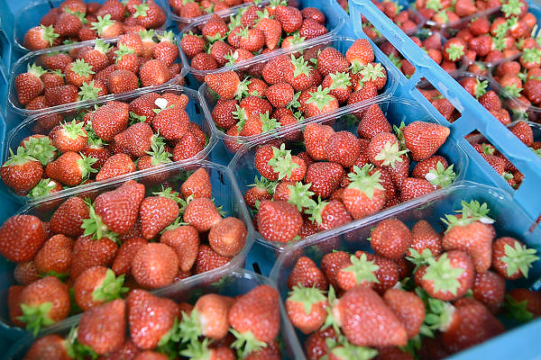 Nederland, Haalderen, 25-7-2013Bakjes met aardbeien staan bij de kweker klaar voor transport.Foto: Flip Franssen/Hollandse Hoogte