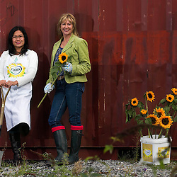 Flora Sunflower Makeover