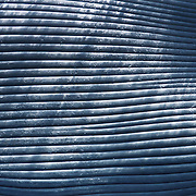 Close-up view of the throat grooves on a dead blue whale, found in the Indian Ocean of Sri Lanka. The whale was most likely the victim of a ship strike by a large container vessel. The main shipping channel south of Sri Lanka passes directly through feeding grounds of blue whales and other cetaceans, which gather in the area to feed on aggregations of krill in deep water. Photo taken under permit.