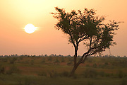 Sunrise over the Sahel near Gorom Gorom, Northeastern Burkina Faso.