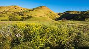 Scorpion Canyon, Santa Cruz Island, Channel Islands National Park, California USA