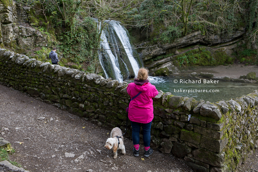 A dog owner and walker at the Yorkshire Dales waterfall called Janet's Foss on 12th April 2017, in Malham, Yorkshire, England. Janet's Foss is a small waterfall in the vicinity of the village of Malham, North Yorkshire, England. It carries Gordale Beck over a limestone outcrop topped by tufa into a deep pool below. The pool was traditionally used for sheep dipping, an event which took on a carnival air and drew the village inhabitants for the social occasion. The name Janet (sometimes Jennet) is believed to refer to a fairy queen held to inhabit a cave at the rear of the fall. A foss is an old Norse word meaning waterfall.