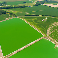 Agricultural waste pools. East shore, Maryland, chesapeake bay.