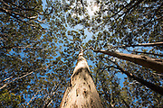 Boranup Forest - Margaret River Region, Western Australia - Photograph by David Dare Parker