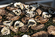 Photo by Matt Roth<br /> Assignment ID: 30148071A<br /> <br /> Ossetra caviar inside Kumamoto oysters from the West Coast were served with cocktails during the wedding of David Hagedorn, a chef and food writer, and Michael Widomski, a spokesman for the National Weather Service at Fiola Restaurant in Washington, DC, Sunday, September 22, 2013. The food had to impress because most of the D.C. culinary royalty was in attendance.