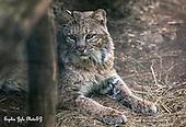Wildlife Refuge Images
