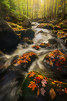 Autumn leaves grace the stream banks of an unamed stream in Groton State Forest, Vermont