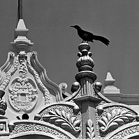 Black and white photo of a church in Mexico with black bird in foreground. Taken with a 35 mm Nikon F in 1962.