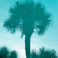 The reflection of a South Carolina palmetto tree in a Myrtle Beach swimming pool. The palmetto is the state symbol.