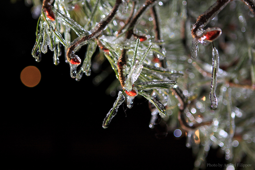 Night shots of the ice covered tree branches during overnight freezing rain in Ottawa, ON, Canada on December 27, 2009.