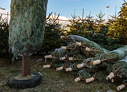 THEMENBILD - Christbaumverkauf von heimischen Tannenbäume, aufgenommen am 02. Dezember 2017, Innsbruck, Österreich // Christmas tree sales of domestic fir trees on 2017/12/02, Innsbruck, Austria. EXPA Pictures © 2017, PhotoCredit: EXPA/ Stefanie Oberhauser