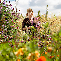 Alun Callender<br /> London, UK<br /> http://www.aluncallender.com<br /> <br /> Writer and gardening guru Sarah Raven at Perch Hill Farm, her home and business near Marlborough.