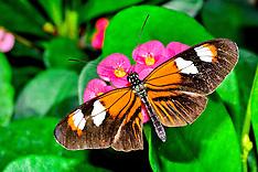 Butterflys-Macro
