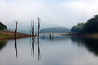 Periyar Lake Reserve in Kerala state india