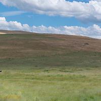 Ranchers on horses near Fossil, Oregon